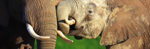 Elephant Whispers Tour ( Elephant Interaction) Packages